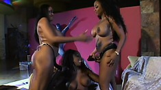 Horny black babes work each other's tight cunts in a kinky threesome