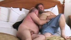 Chubby Gay Bears Do A Little Cock Sucking And Butthole Licking